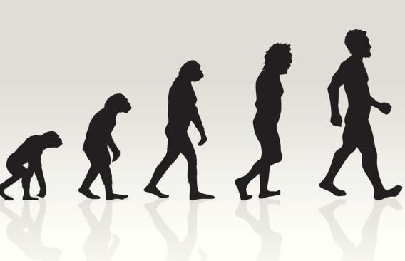 Evolution-2-568x366