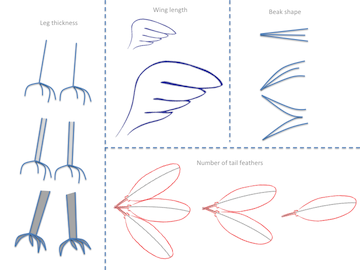 Reptilobird body parts