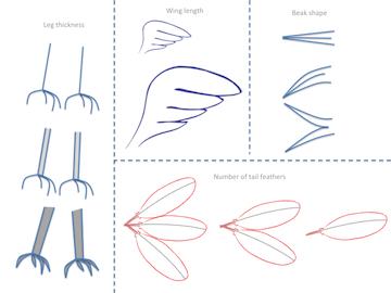 Reptilobird body parts