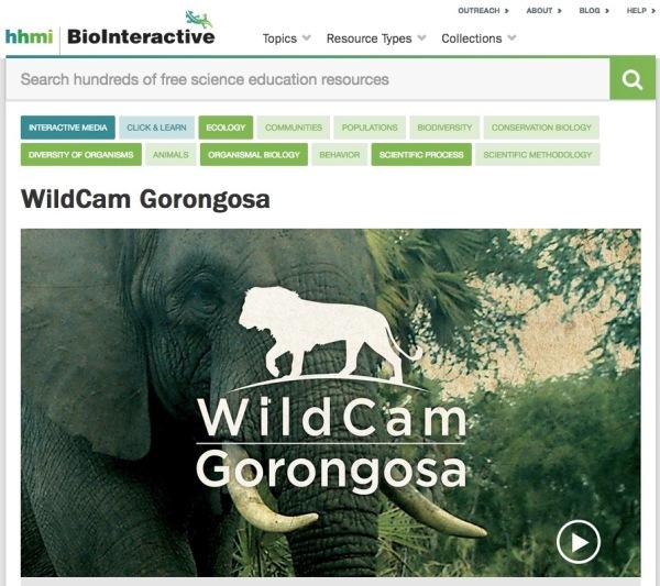 WildCam screen capture